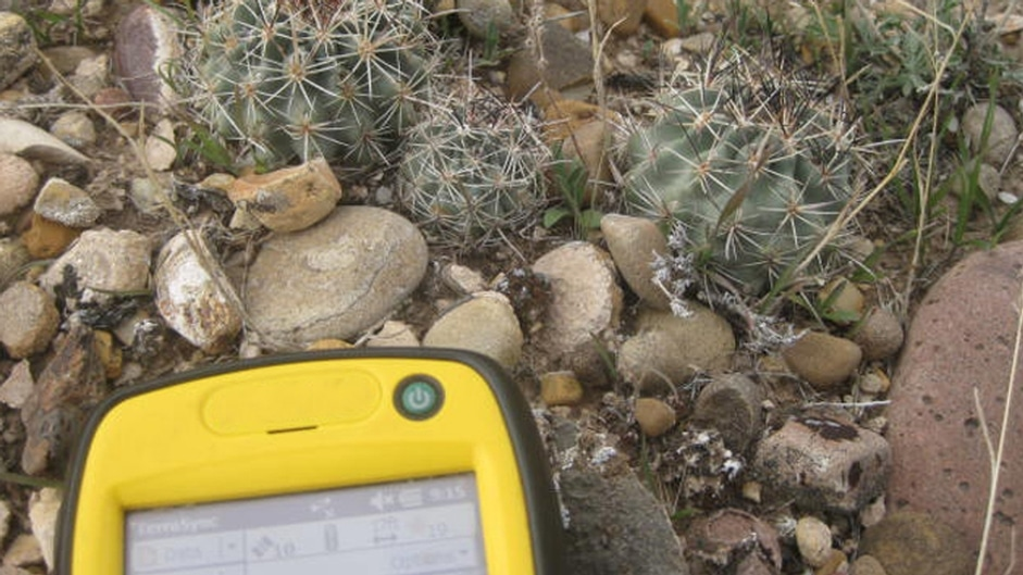 Crescent Point Threatened and Endangered Cactus Survey